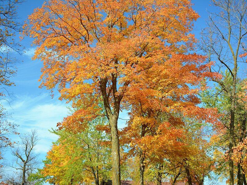 Southwest Michigan Area Realtors - Fall Scene
